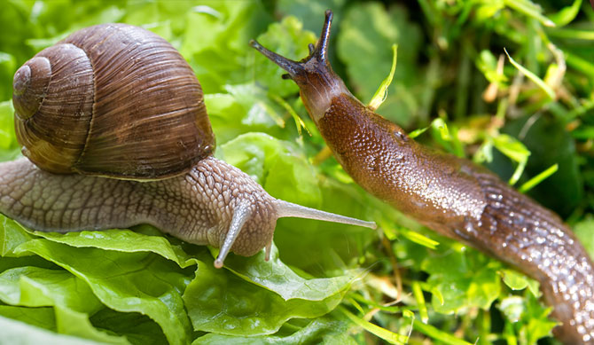 Snails And Slugs Upskilling With Unschooling